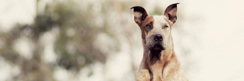 las razas de perro mas caras de mantener